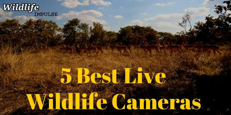 5 Best live wildlife cameras