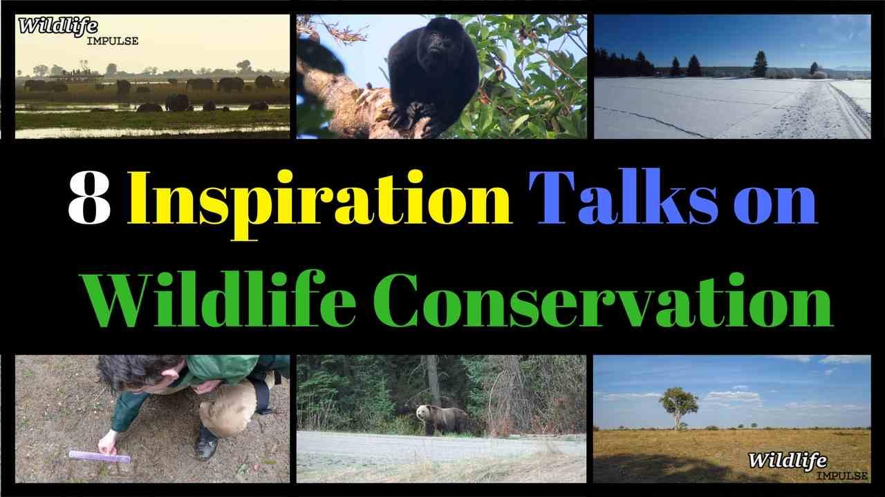 8 inspiration talks on wildlife conservation