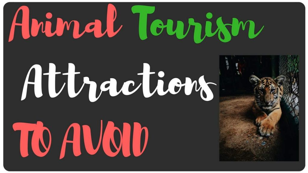 Animal tourism attractions to avoid
