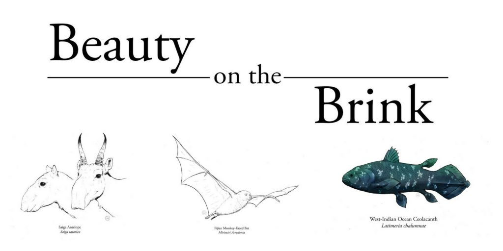 Beauty on the brink