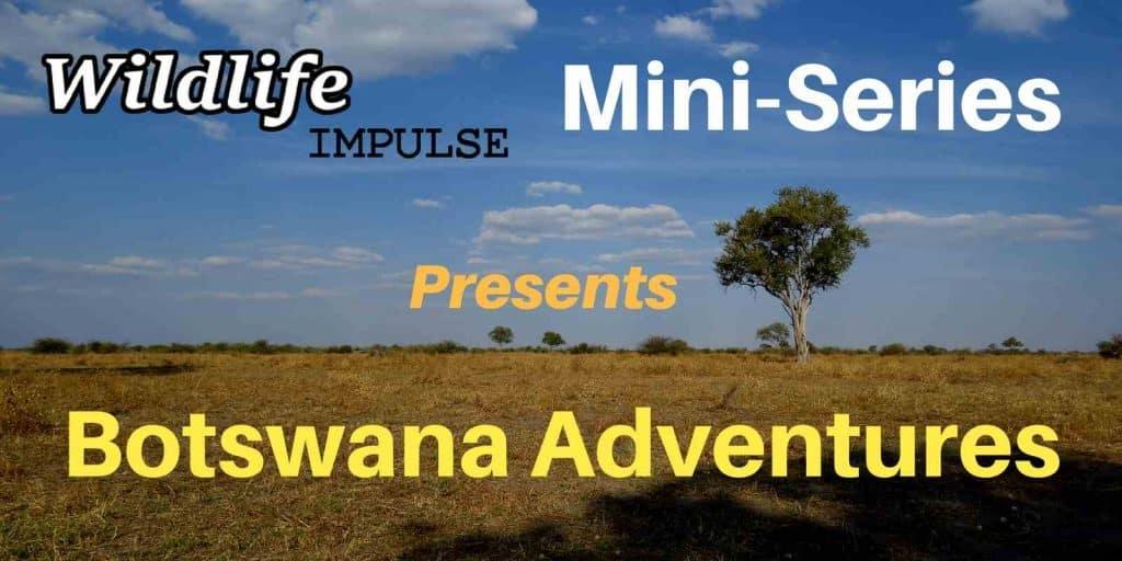 Botswana Adventures- Mini-Series