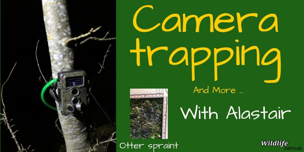 Camera Trapping for Pine Martens