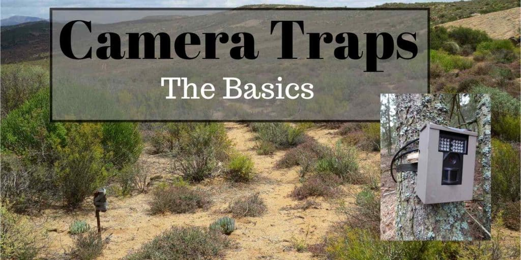 Camera traps - basics-min