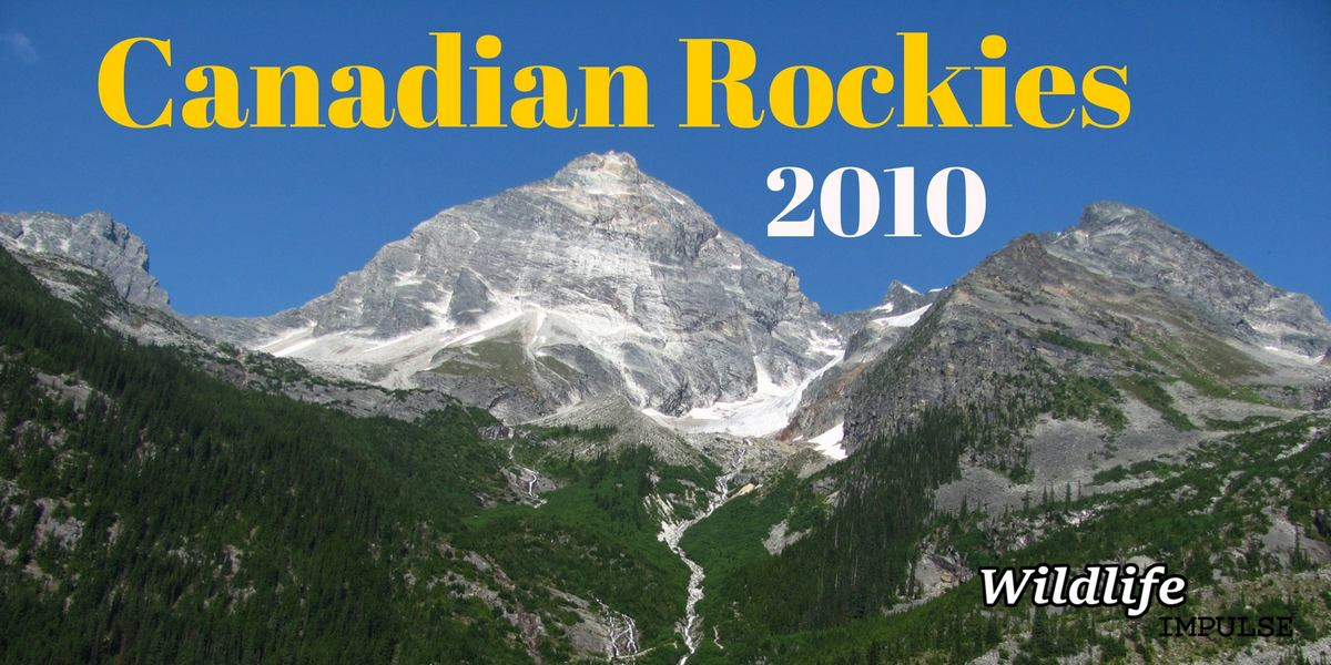 Canadian Rockies 2010