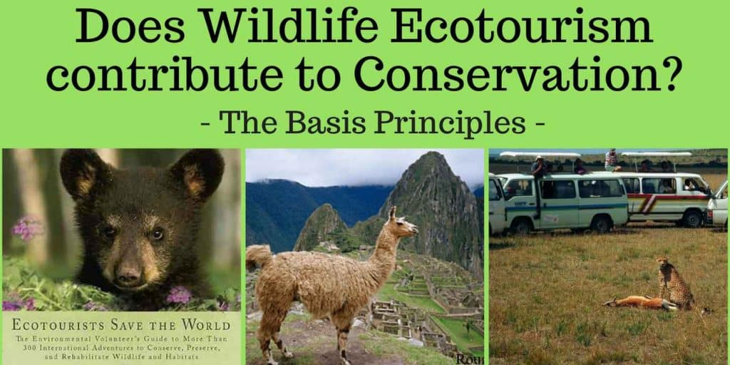 Wildlife Tourism Contributing to Animal Conservation