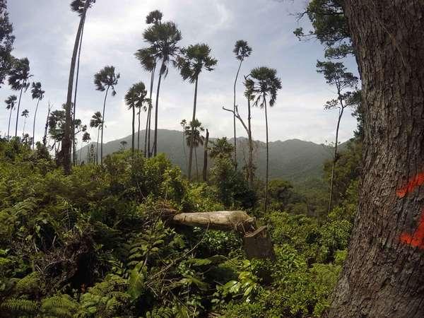 Honduras travel