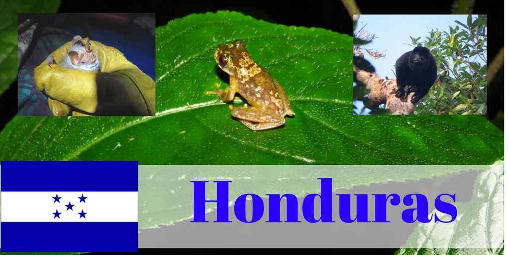 Honduras-Opwall