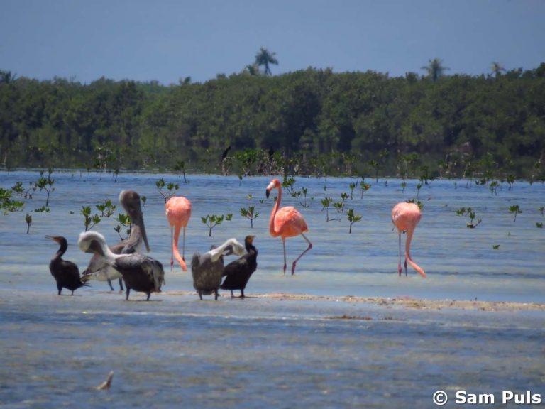 birdwatching at isla holbox