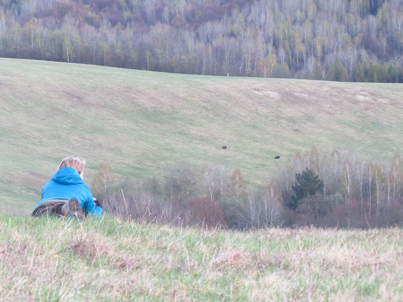 european-bison-poloniny-slovakia