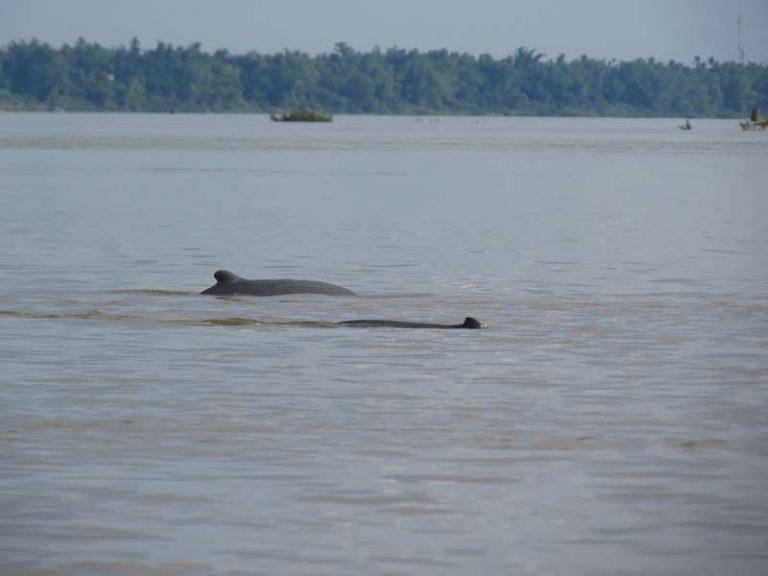 wildlife in cambodia