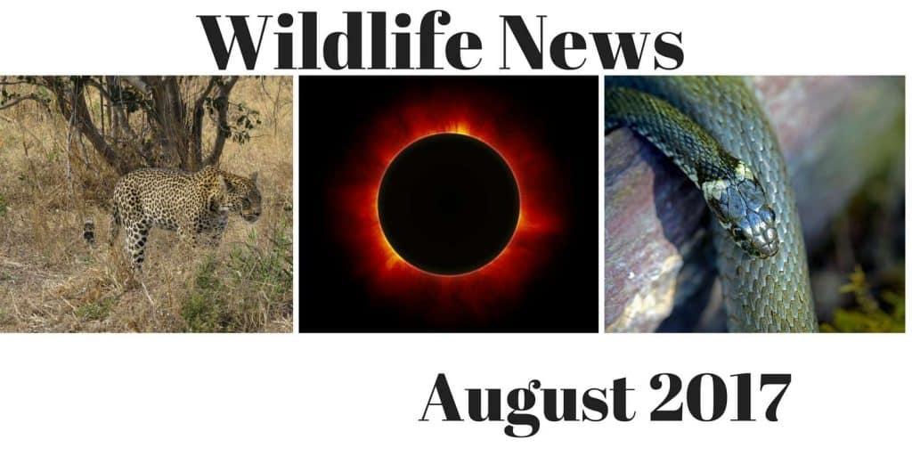 News August 2017