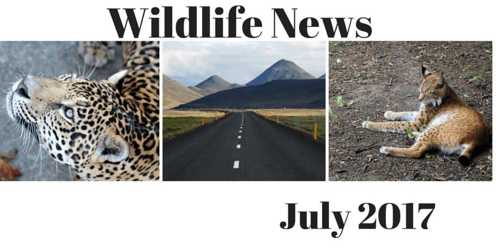 News July 2017