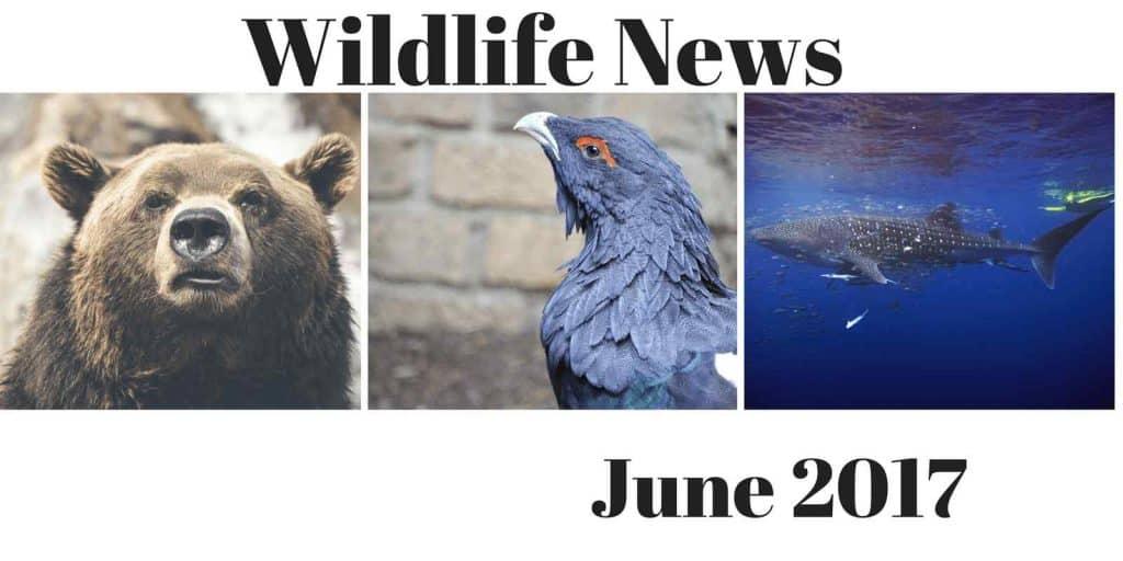 News June 2017