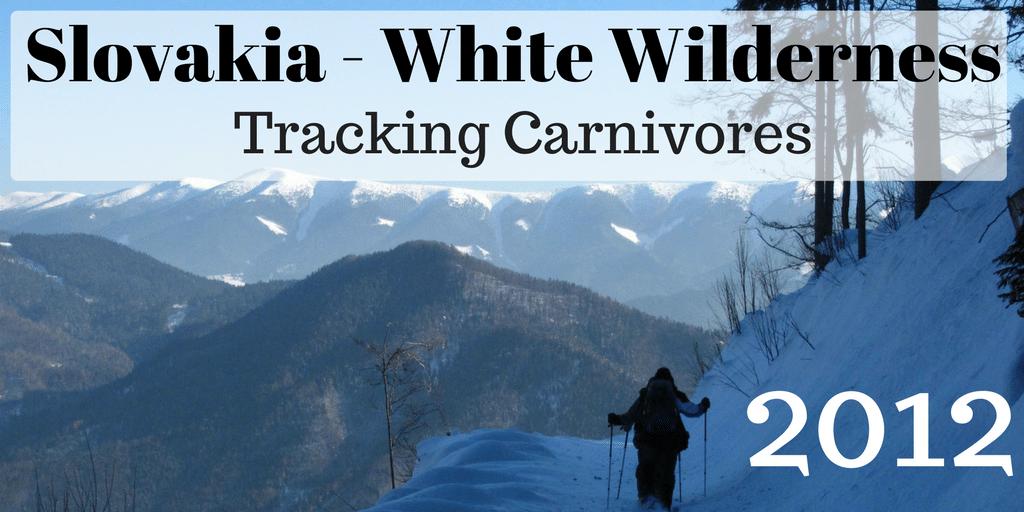 Slovakia 2012: White Wilderness