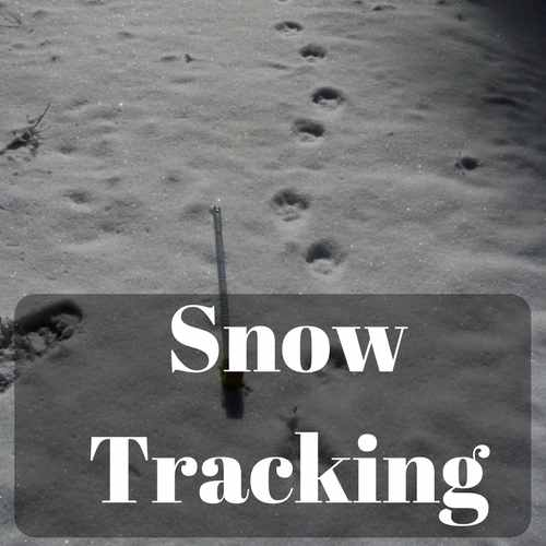 Snow Tracking