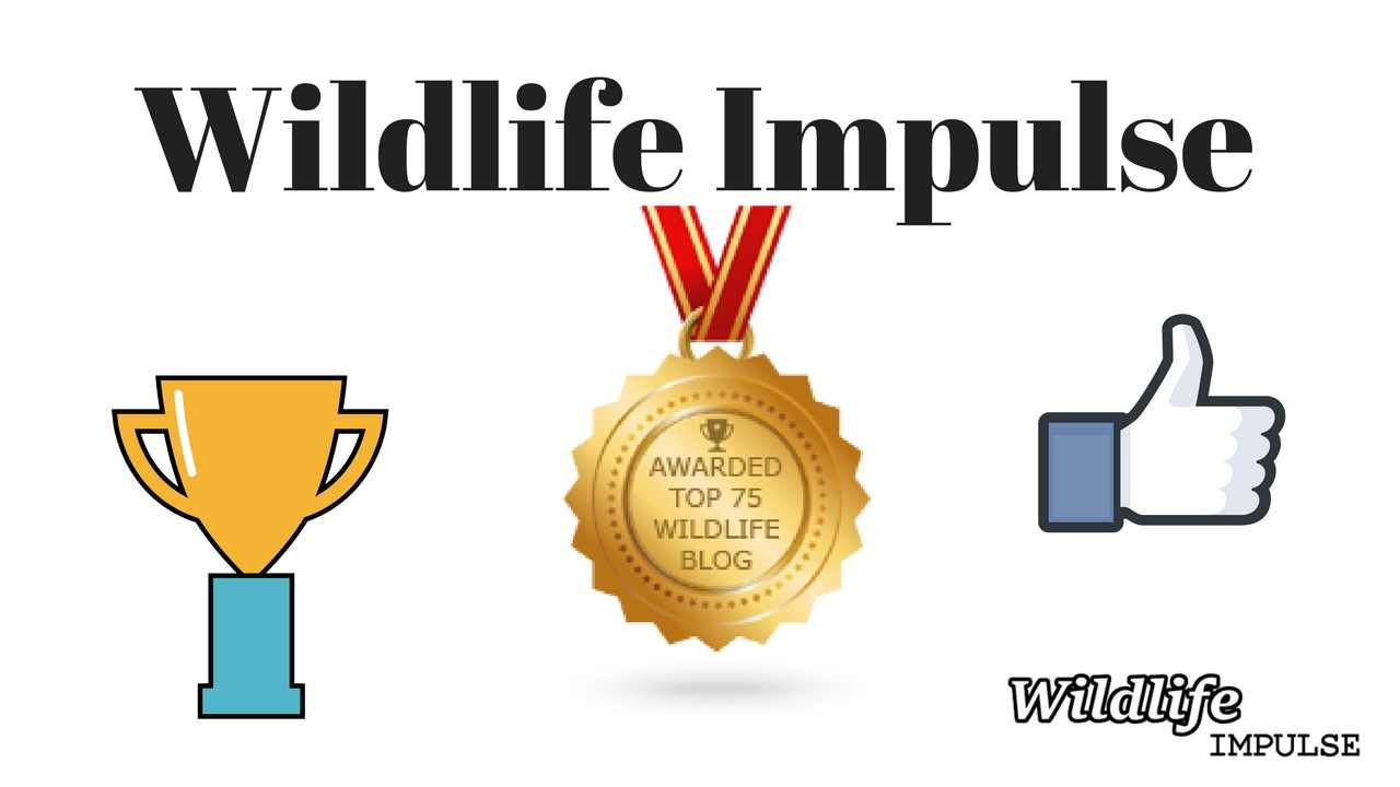 Wildlife Impulse - Top 75 Wildlife Blogs