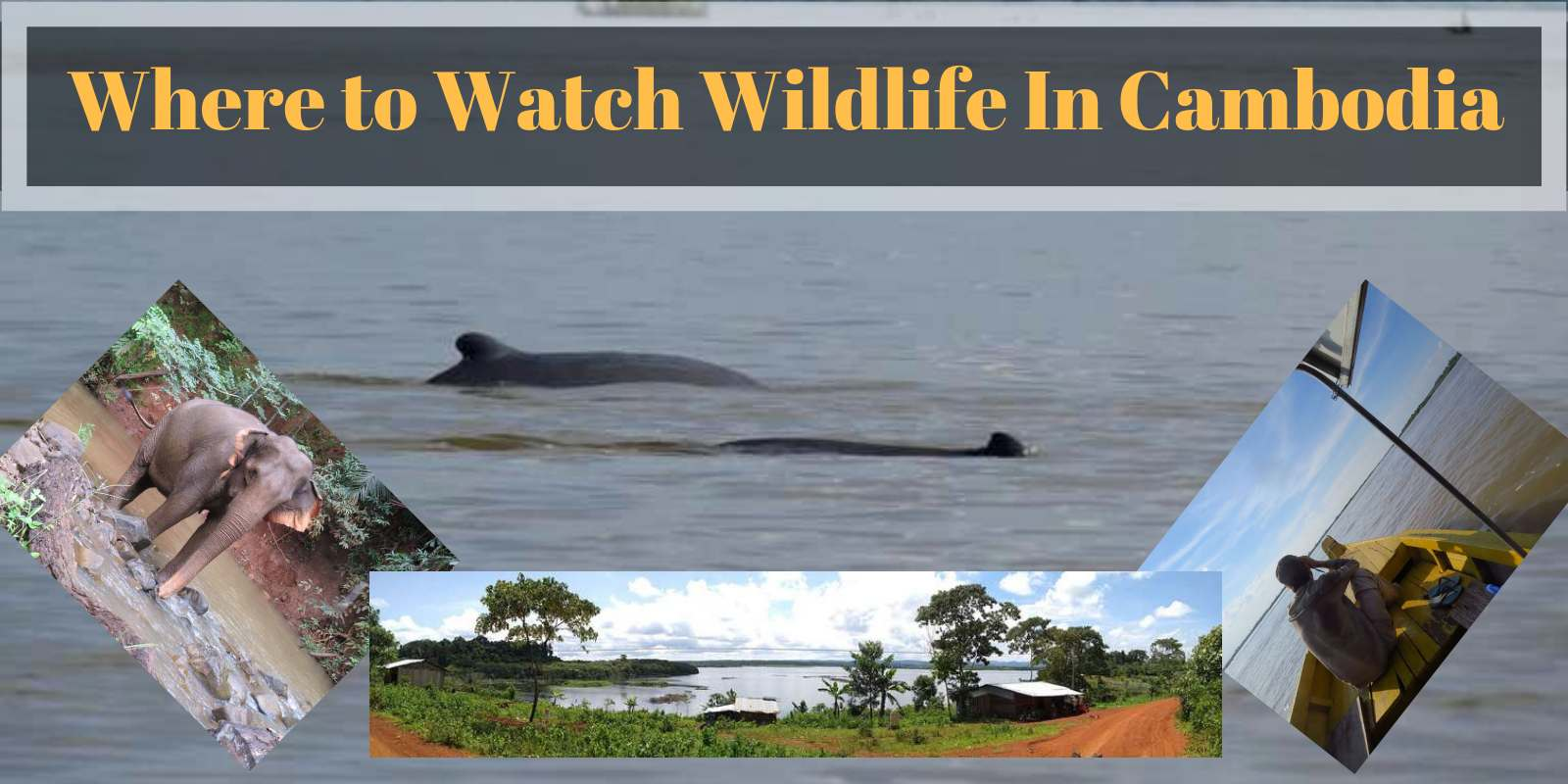 Where to watch wildlife in Cambodia