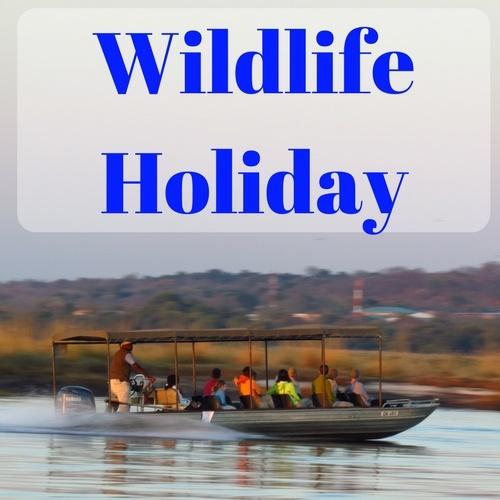 Wildlife Holiday