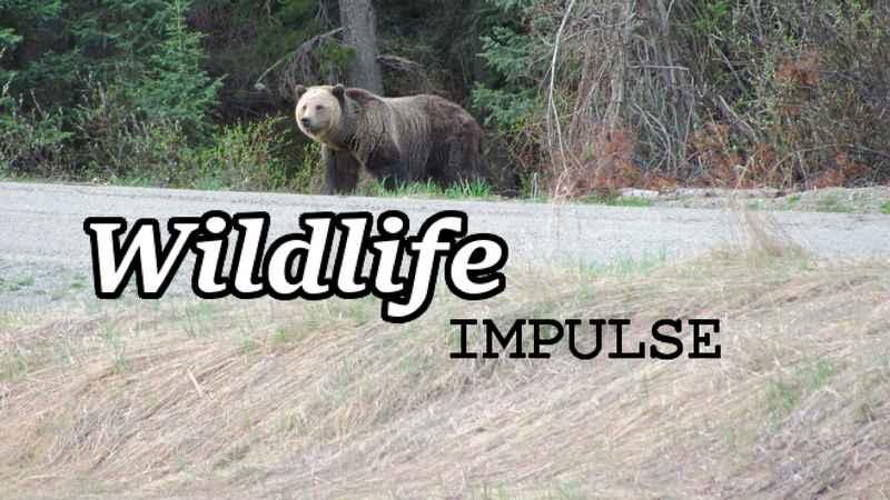 Wildlife Impulse Home
