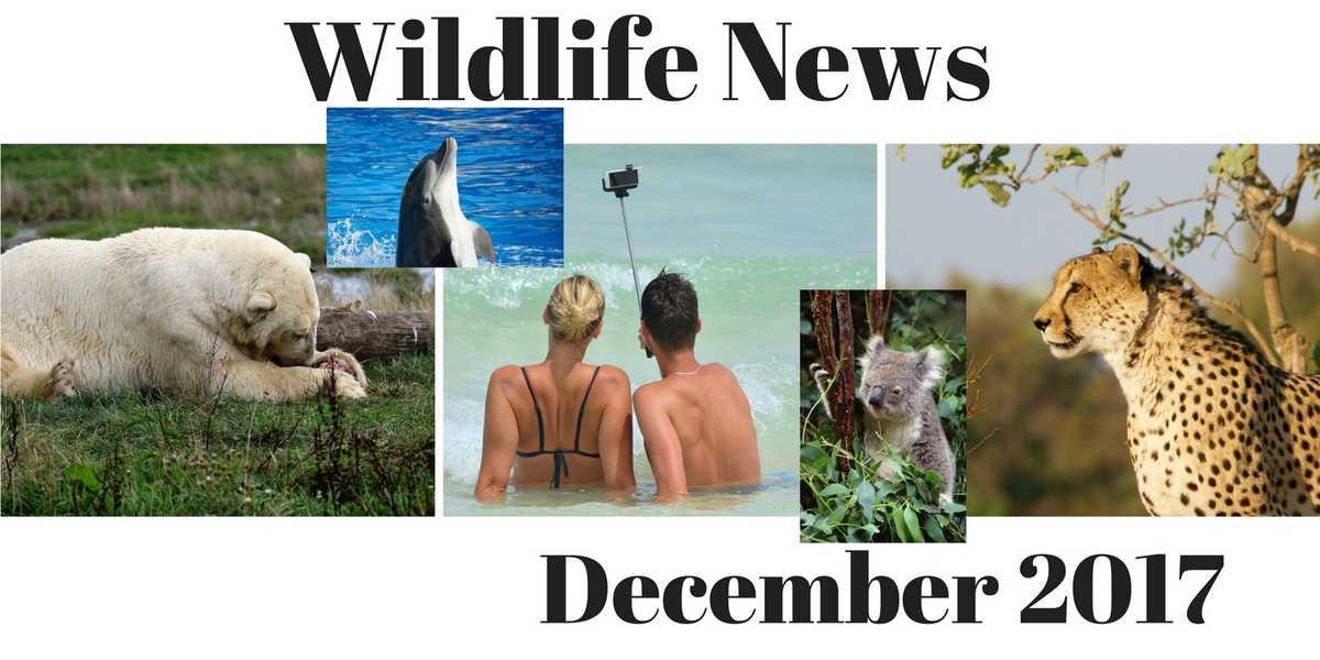 Wildlife News December 2017