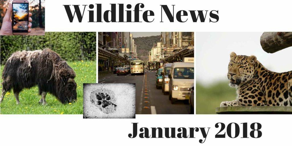 Wildlife News January 2018