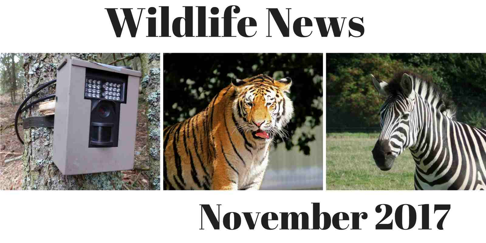 Wildlife News November 2017