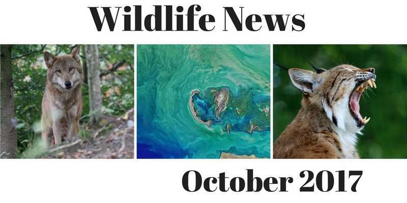Wildlife News October 2017