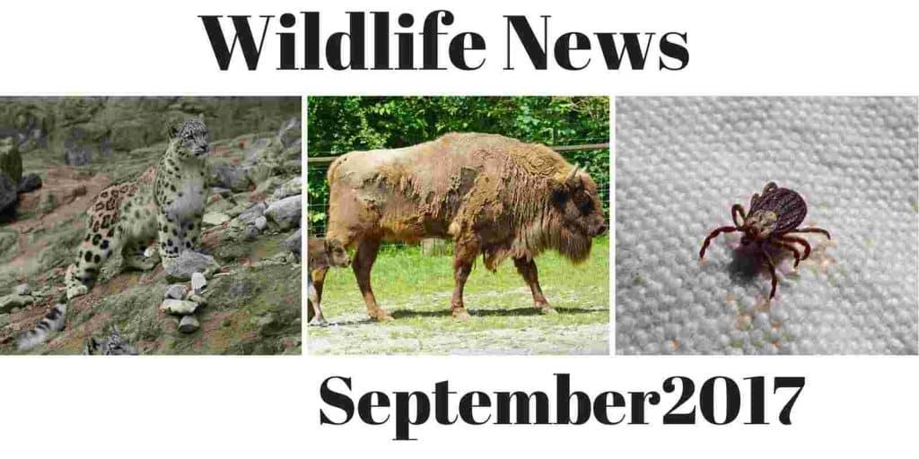 Wildlife News September 2017