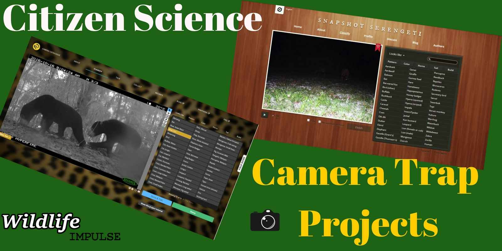 Wildlife volunteering online Citizen Science camera trap projects