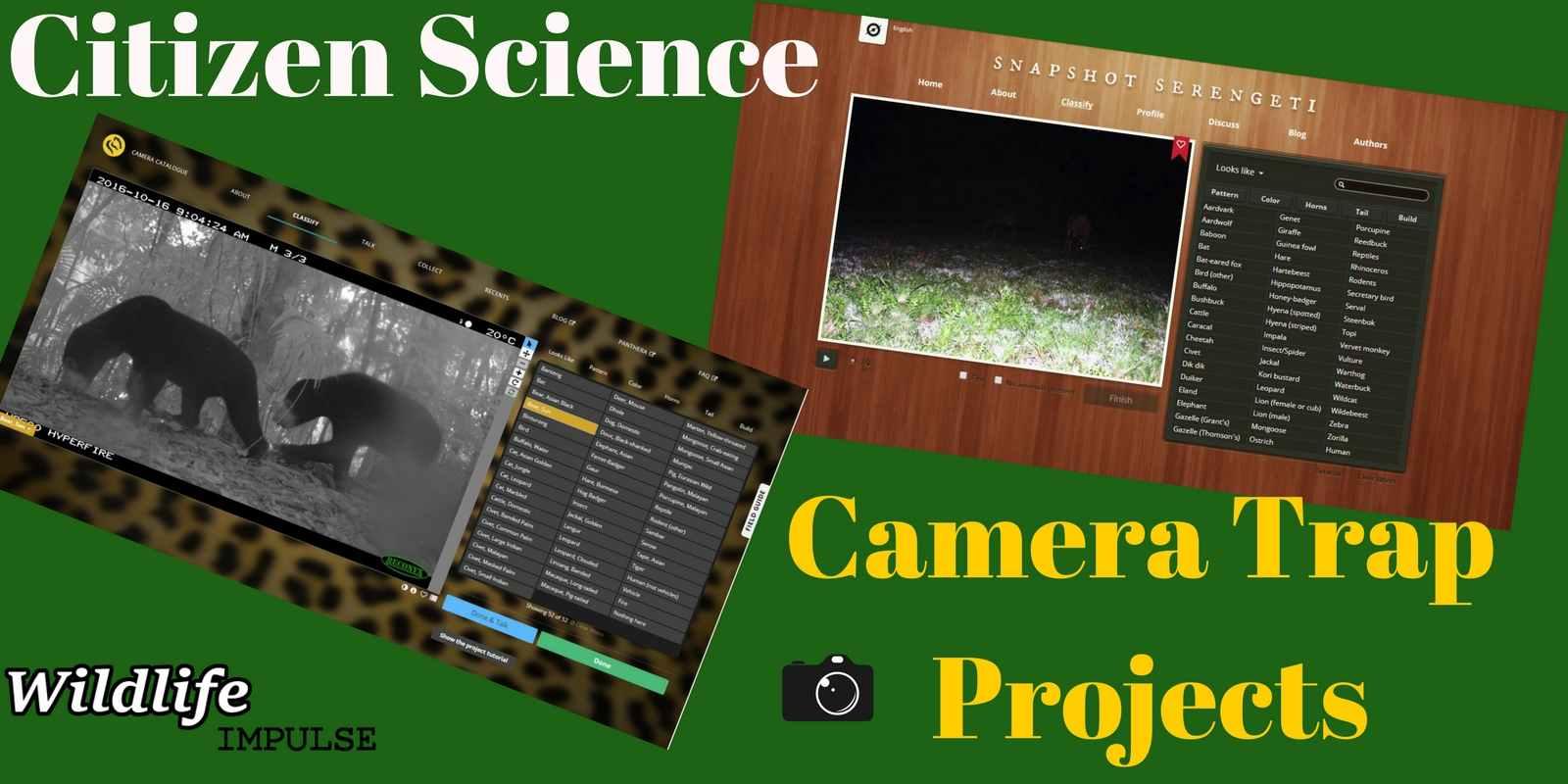 Wildlife volunteering online Citizen Science camera trap projects