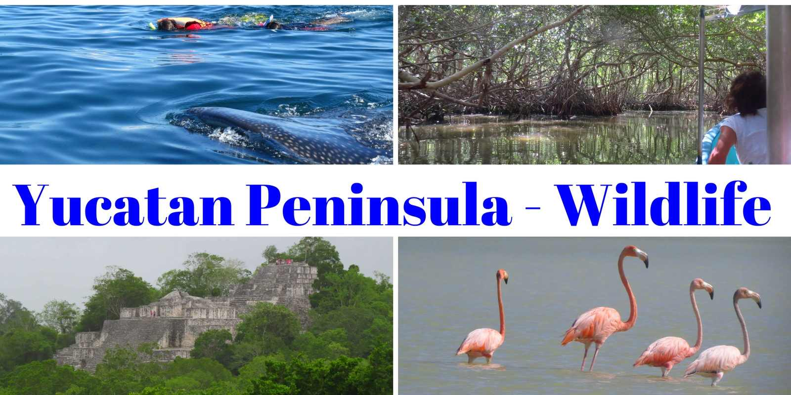 Yucatan Peninsula - Wildlife
