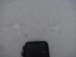 black grouse tracks