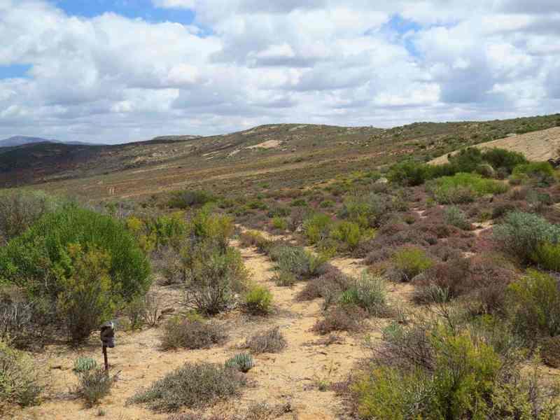 cameratrap near trail