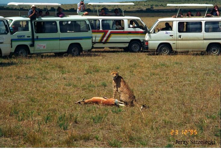 cheeta animal conservation