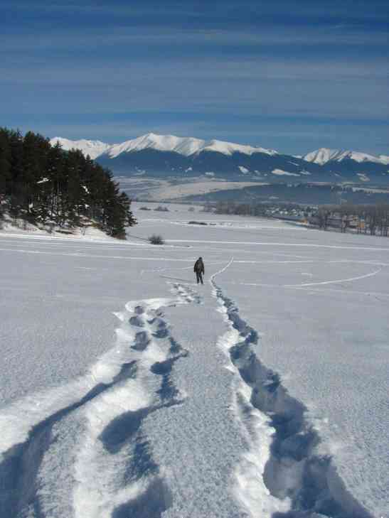 Wolf tracks on the left