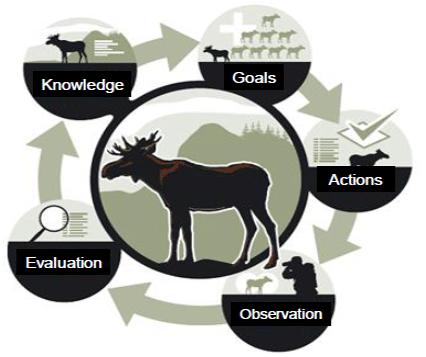 Animal conservation management plan