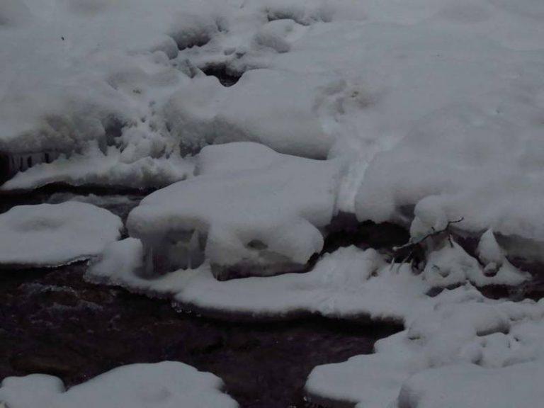otter slide in river