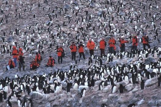 Animal conservation penguin