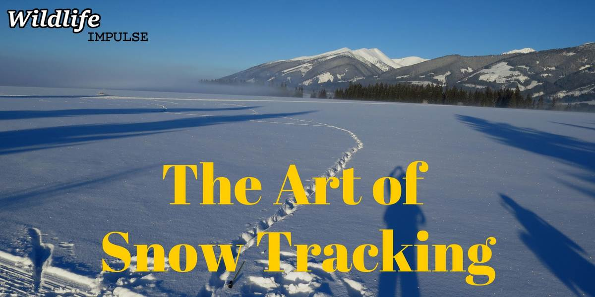 the art of snow tracking